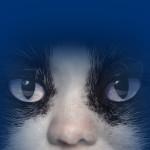 Cats Luisenburg Keyvisual