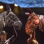 Gefährten Pferde