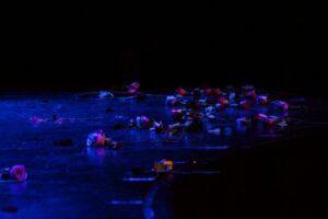 Rosen auf der Bühne