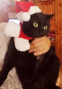 Unser Weihnachtswichtel Carlos